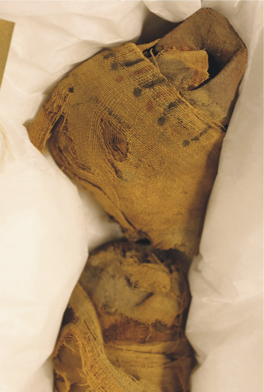Image for: Mummified head of a cat