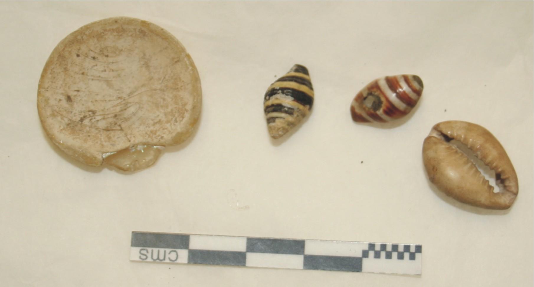 Image for: Shells