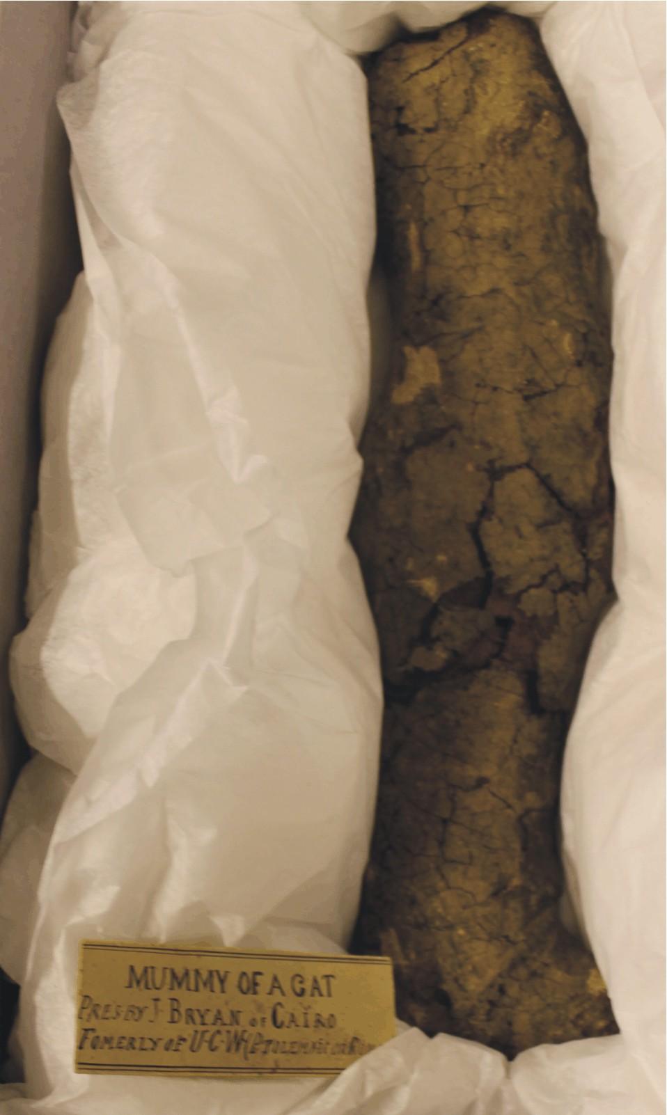 "Image for: Mummified ""cat"""